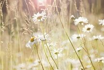 |From The Meadow|