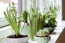 |Potted Perfection|