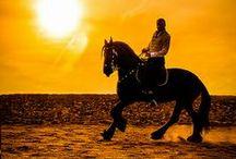 Mis Caballos / Cheval | Chevaux | Horse | Horses | Mules