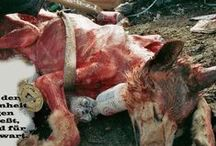 Animal Rights / Suffering of animals and how we need to stop it.. / by Maria