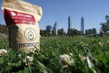 Momoto: Café Orgánico y Biosustentable / Café Orgánico y Biosustentable/Organic and sustentable coffee Café de especialidad mexicano