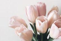 | Flowers | / Pretty flowers + bouquets.