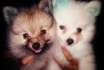 My Lovely Pets / Cute and lovely.