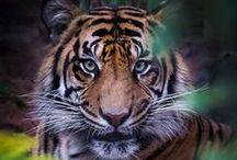 Beautiful wild animals
