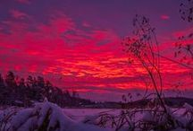 Purple &Red,some pink / by Marsha Gulick