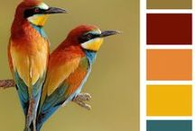 Beautiful Color Palettes / by Marsha Gulick
