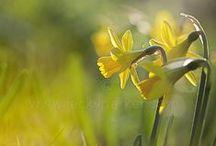 É primavera!!!!