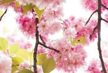 S P R I N G / Spring Time Inspirations