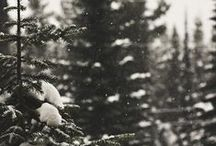 Autumn/Winter / #autumn #winter #halloween #fall #christmas  / by Octobur Frost