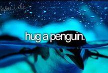 Penguins / Penguins
