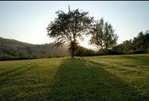 Il Parco termale / Il Parco Termale delle Terme di Stigliano è un'autentica oasi a soli 50 minuti dalla frenesia delle città di Roma e di Viterbo. Il rigoglioso parco é immerso in un contesto di colline verdi di 20 ettari, con ben 5 fonti termali da cui sgorga acqua di natura solfo-iodica ipertermale (da 36°C a 56°C). Cosa aspetti? Ti aspetta una lunga stagione di benessere per ritrovare pace e benessere tutte le volte che vuoi.
