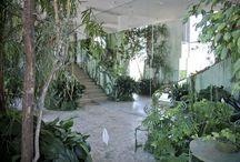 INDOOR PLANTS DISPLAY
