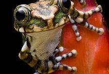 frooogs <3