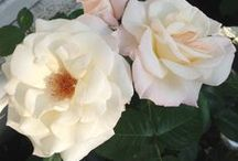 Le jardin d'Olga / Les fleurs du jardin