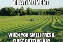 Users from the #Pinterest Community sharing pictures of #farmlife and #hay / Pictures  n o t  taken by haydryers.com showing: #hay #haybales #bales of hay #haystacks #haycubes #cubes #cutting hay #conditioning hay #wilting hay #swathing hay #baling hay #forage #fodder# #nutrition #dairy #cows #dairycows #horses #sheep #goats #farms #farmers #farming #farmlife #agriculture #land