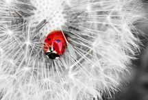 C: Black White Red