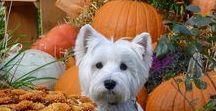 The Pumpkin Patch / Pumpkins aren't just for Halloween