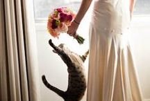 Fuzzy Friends | Pets & Weddings / Time spent with pets is never wasted.