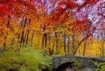 Fall / by Brandy Schneider