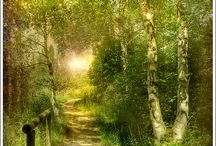 Lovely streets, roads, trails, paths and stairways / by Sally Chamberlain