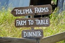 Our Farm to Table Dinners / Savor the season's bounty with a gourmet dinner on a beautiful West Marin farm!