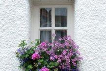 Windows&flowers