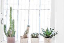 Cactus/Succulents / Succulents-Cactus-Suculentas-Decoration-Indoor