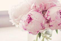 Peonias / Peonies- Flowers