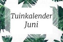 TUINKALENDER | JUNI | TUIN