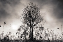 Black&White + Nature, Perfection / by Werner Du Preez