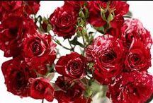 Blumenschmuck / Als, Brautstrauß, kleine Brautstraußversion fürs Schmeißen, zum Auto, ins Haar oder an den Arm