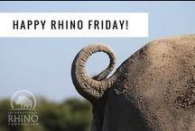 Rhinos, Rhinos everywhere