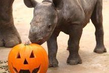 Halloween- BOO! / Share your rhino love during Halloween!