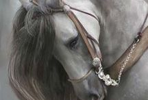 Magnificent Horses / The magnificence of horses on display
