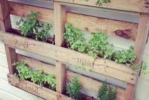 Garden info / Herb gardens