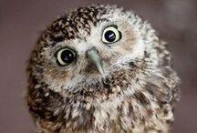 motif | owl / inspirational owls