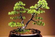 Ikebana, Topiary, ℬonsai...