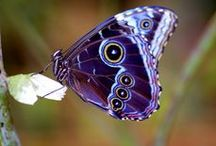 Butterflies, Moth n' Dragonflies