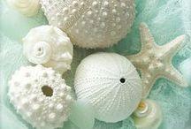Sea-Shells, Urchins, Conch & Starfish...