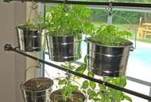 Garden Grove / How to grow your own vegetables and fruits!