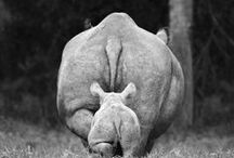 ..Black and White Animal's Photography