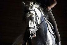 Horse Pride...