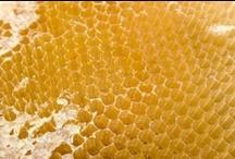 Beekeeper?