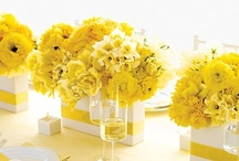 Wedding and Reception Flowers     / by Melody Rasmussen