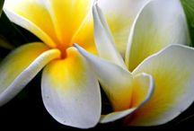 flower &.....