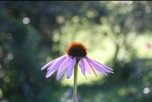 Honey Bee Nursery / SHo Farm | Huntington, Vermont