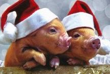 Animal antics / Cute bunnies, cats, birds and dogs - what better way to send Christmas wishes an animal lover!