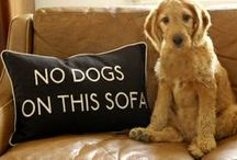 """Dogs / """"There are no bad days when you come home to a dogs's love."""" Woof. / by Sandy"""