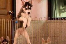 DOGS / HEALTH / WARNIGS & MORE..