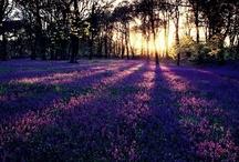 Shades of Purple / by Sandi Burgess